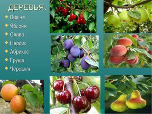 ДЕРЕВЬЯ: Вишня Яблоня Слива Персик Абрикос Груша Черешня