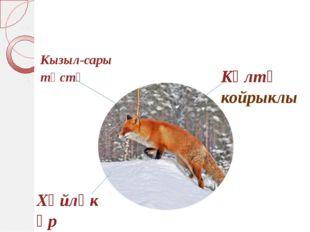 Кызыл-сары төстә Хәйләкәр Көлтә койрыклы