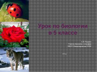 Урок по биологии в 5 классе А.Н. Рудаева Учитель биологии, географии МКОУ Ком