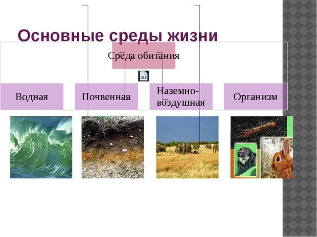 Основные среды жизни