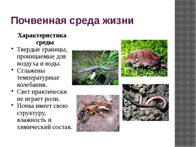Почвенная среда жизни Характеристика среды Твердые границы, проницаемые для в...
