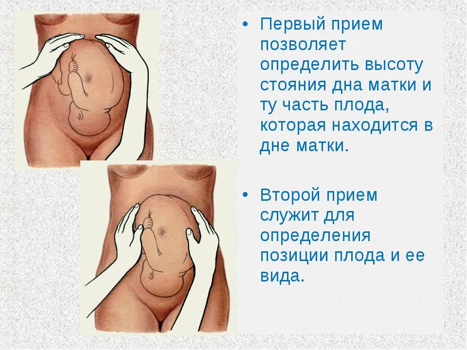 Первый прием позволяет определить высоту стояния дна матки и ту часть плода,...