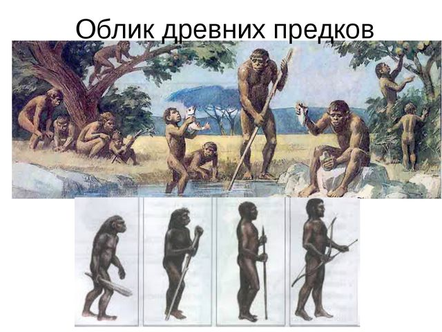 Облик древних предков