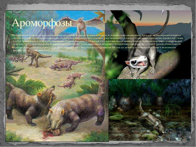 Возникновение млекопитающих связано с рядом крупных ароморфозов, возникших у...