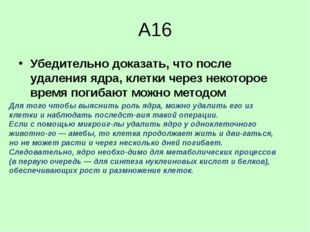 А16 Убедительно доказать, что после удаления ядра, клетки через некоторое вре