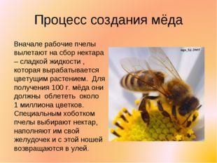 Процесс создания мёда Вначале рабочие пчелы вылетают на сбор нектара – сладко