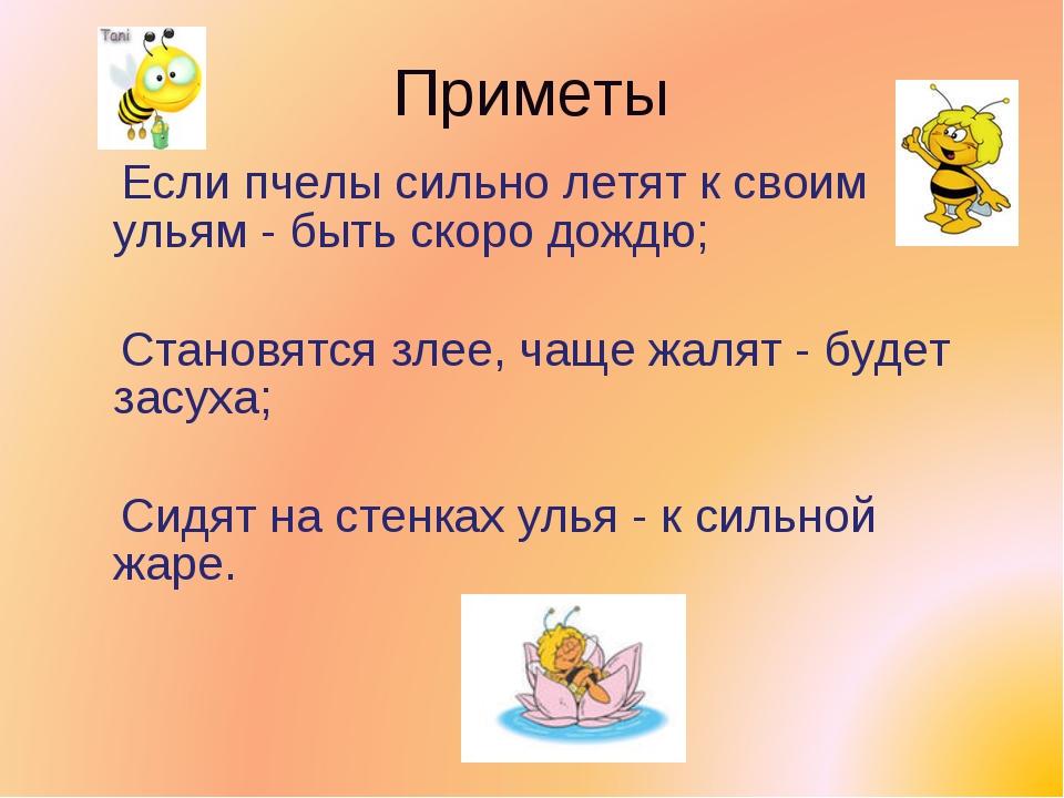 Приметы Если пчелы сильно летят к своим ульям - быть скоро дождю; Становятся...