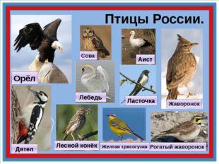 Птицы России. Рогатый жаворонок Жаворонок Орёл Дятел Желтая трясогузка Лесно