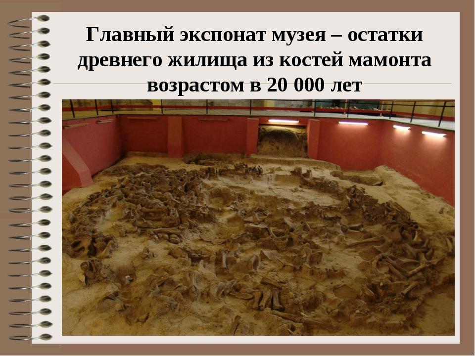 Главный экспонат музея – остатки древнего жилища из костей мамонта возрастом...