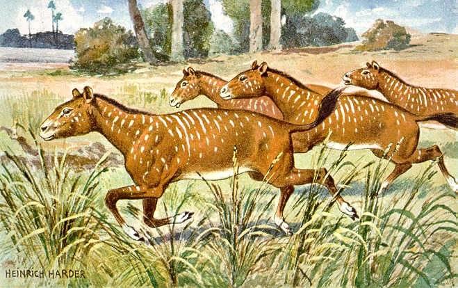 Происхождение и история лошади. Mesohippus. Художник Heinrich Harder