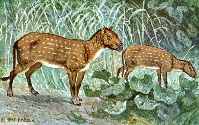 Происхождение лошади. Гиракотерий