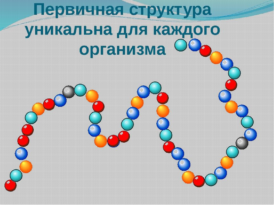 Первичная структура уникальна для каждого организма