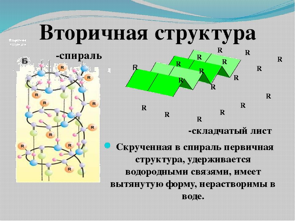 Вторичная структура Вторичная структура α-спираль Β-складчатый лист R R R R R...