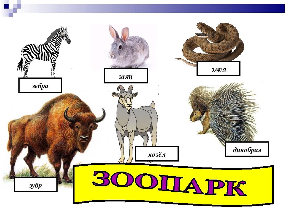 зебра заяц змея зубр козёл дикобраз