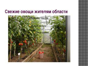 Свежие овощи жителям области
