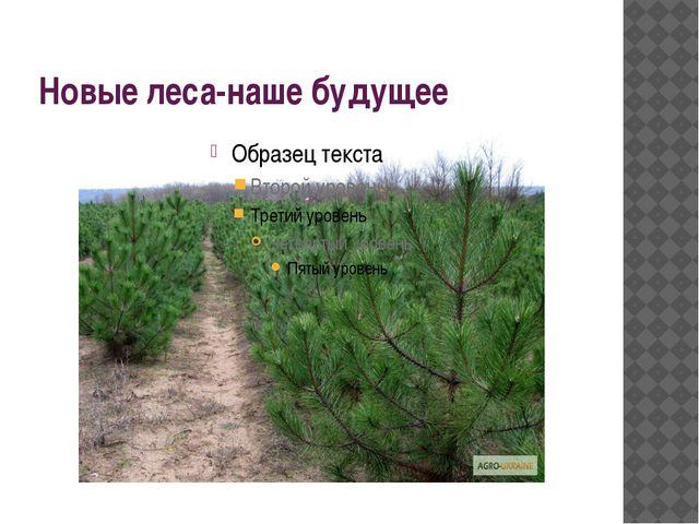 Новые леса-наше будущее