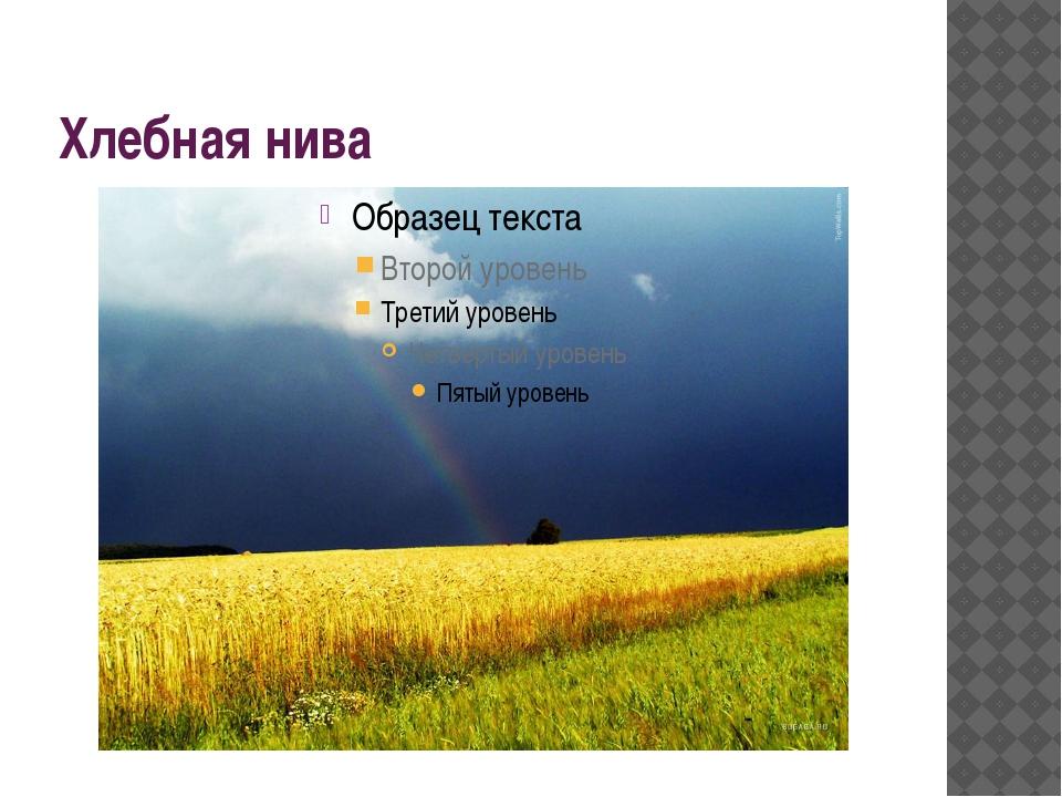 Хлебная нива