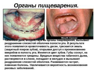Органы пищеварения. Табачный дым, воздействуя на органы пищеварения, вызывает
