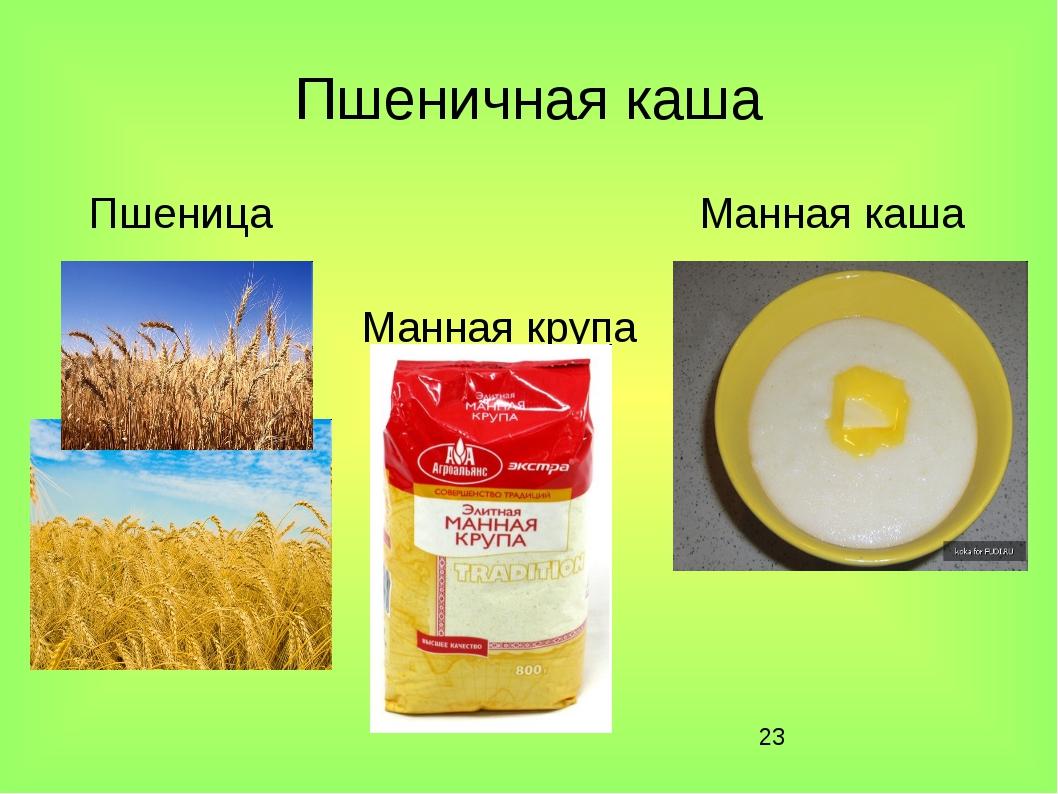 * Пшеничная каша Пшеница Манная каша Манная крупа