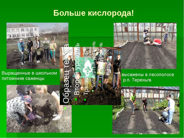 Больше кислорода! Выращенные в школьном питомнике саженцы высажены в лесополо...