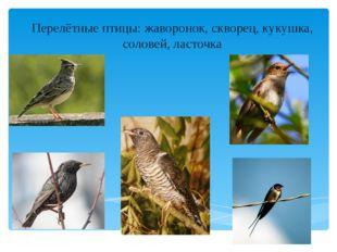 Перелётные птицы: жаворонок, скворец, кукушка, соловей, ласточка