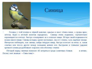 Головка у этой птички в чёрной шапочке, крылья и хвост тёмно-синие, а грудка