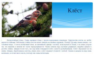 Интереснейшая птица. Очень нарядная птица с красно-коричневым оперением. Оди