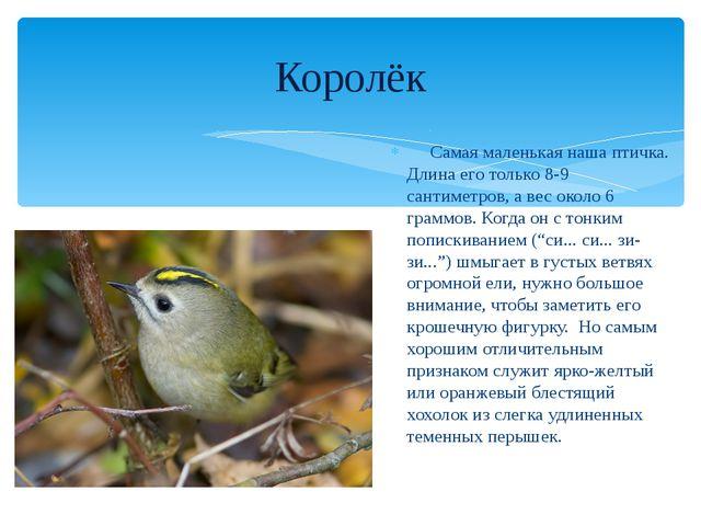 Самая маленькая наша птичка. Длина его только 8-9 сантиметров, а вес около 6...