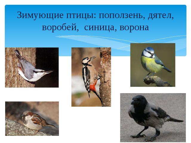 Зимующие птицы: поползень, дятел, воробей, синица, ворона