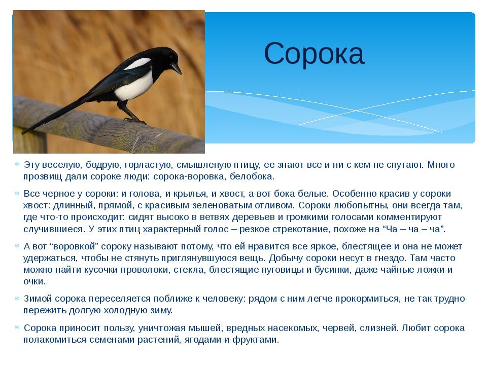 Эту веселую, бодрую, горластую, смышленую птицу, ее знают все и ни с кем не с...