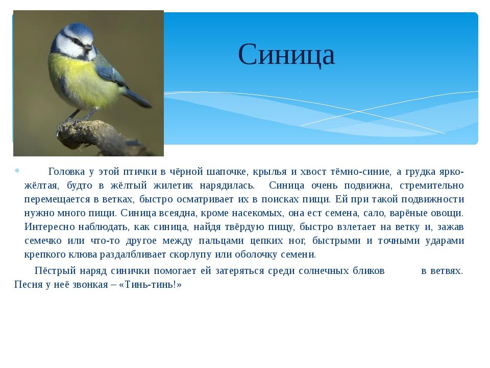 Головка у этой птички в чёрной шапочке, крылья и хвост тёмно-синие, а грудка...