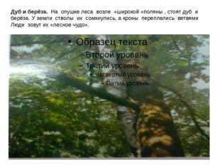 Дуб и берёза. На опушке леса возле «широкой «поляны , стоят дуб и берёза. У з