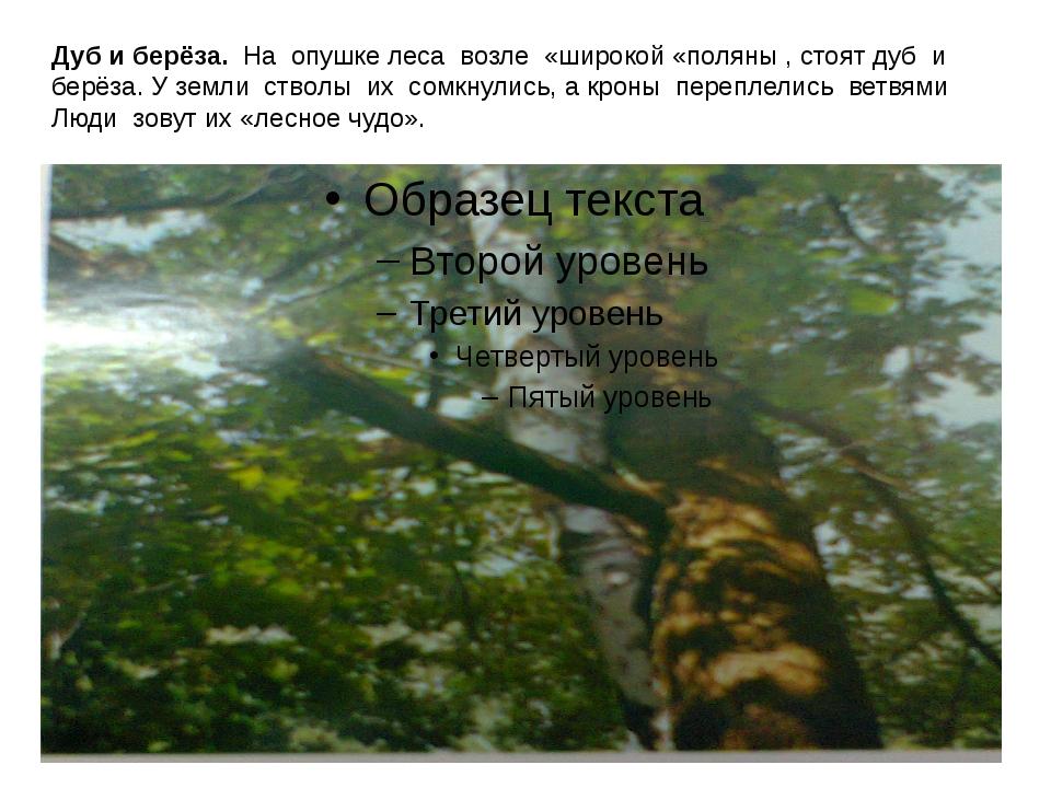 Дуб и берёза. На опушке леса возле «широкой «поляны , стоят дуб и берёза. У з...