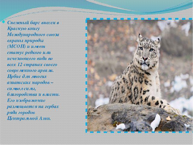 Снежный барс внесен в Красную книгу Международного союза охраны природы (МСОП...