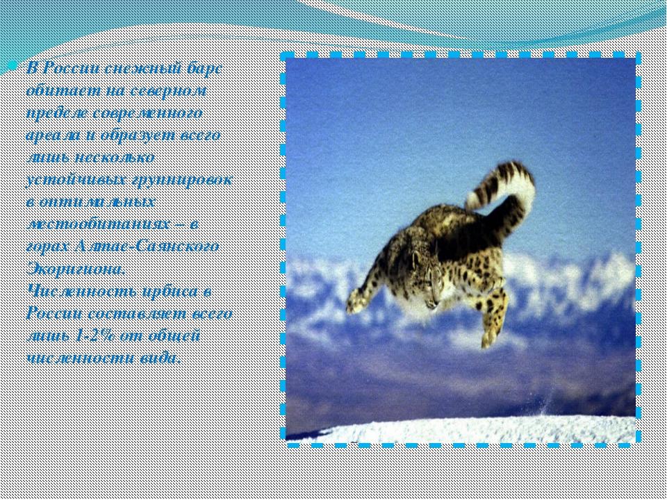 В России снежный барс обитает на северном пределе современного ареала и образ...