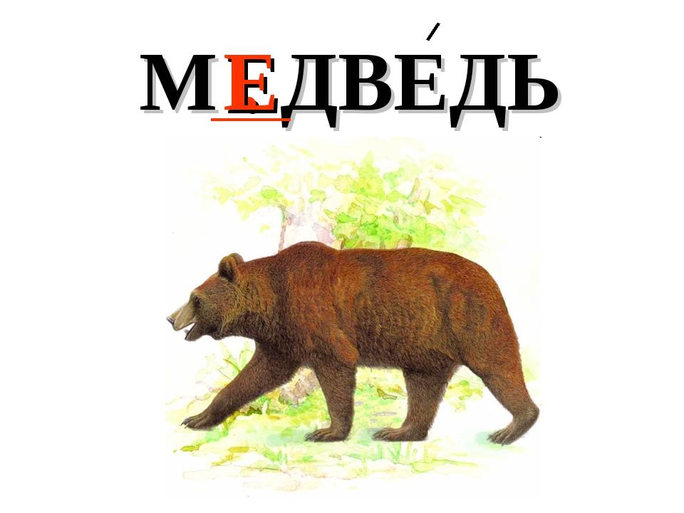 М . ДВЕДЬ Е