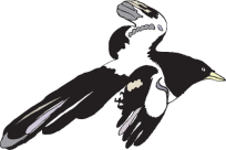 http://www.pd4pic.com/images/black-spread-white-bird-flying-wings-feathers.png