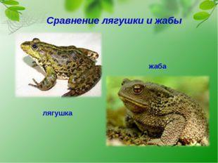 Сравнение лягушки и жабы лягушка жаба