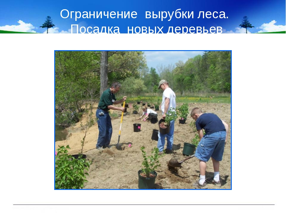 Ограничение вырубки леса. Посадка новых деревьев