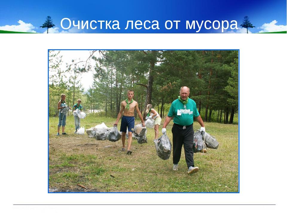 Очистка леса от мусора