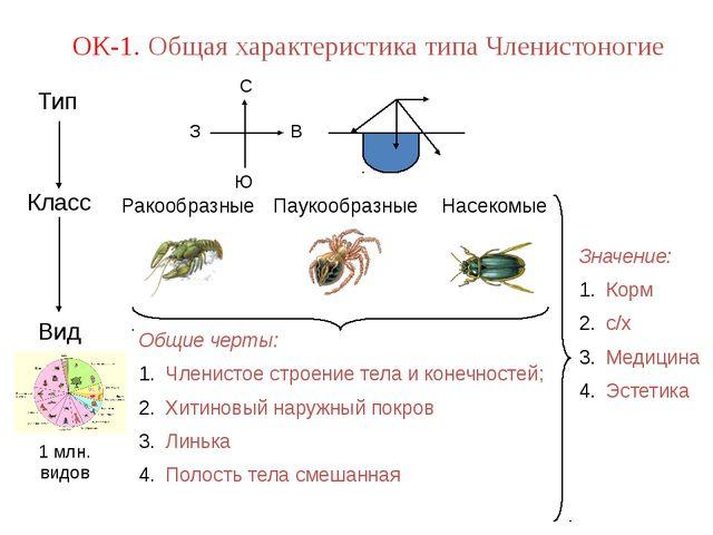 1 млн. видов ОК-1. Общая характеристика типа Членистоногие Значение: Корм с/х...