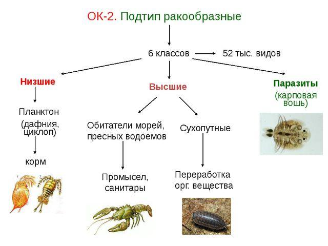 ОК-2. Подтип ракообразные 6 классов Низшие Высшие Планктон (дафния, циклоп) к...