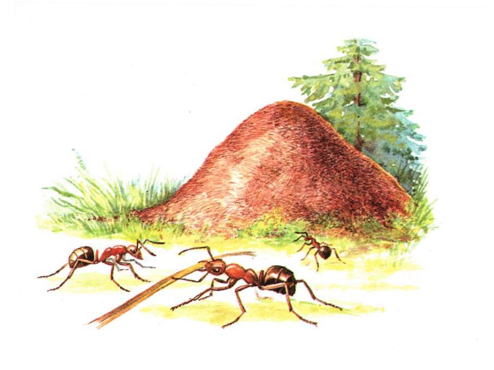 Пришвин муравьи картинки