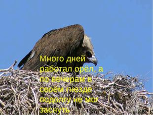 Много дней работал орёл, а по вечерам в своём гнезде подолгу не мог заснуть