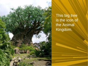 This big tree is the icon of the Animal Kingdom.