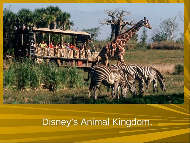 Disney's Animal Kingdom.