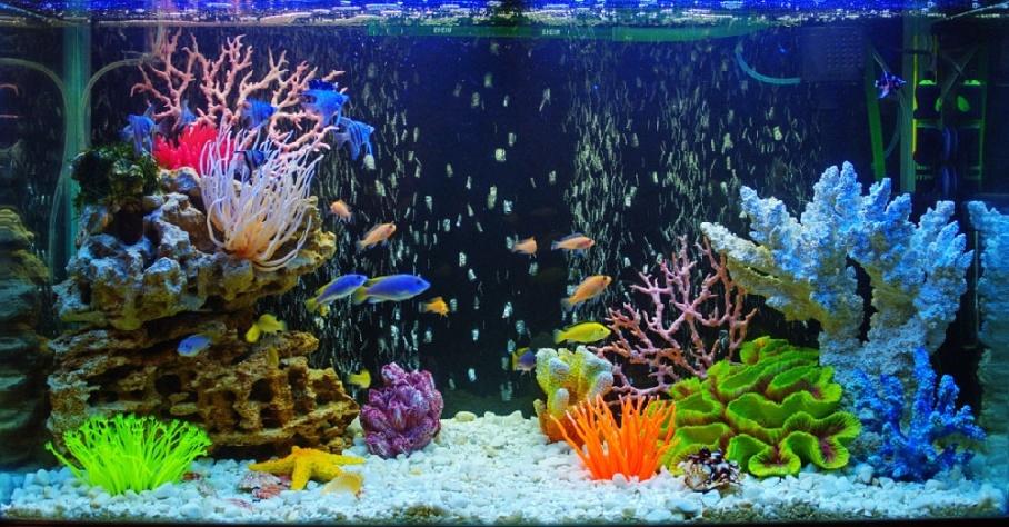 Если дома есть аквариум с рыбками FreeMin - твое свободное время