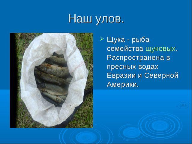 Наш улов. Щука - рыба семействащуковых. Распространена в пресных водах Евраз...