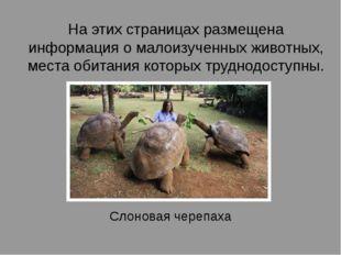 На этих страницах размещена информация о малоизученных животных, места обитан