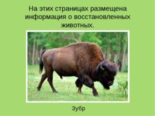На этих страницах размещена информация о восстановленных животных. Зубр